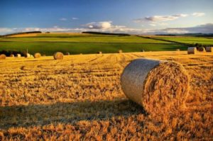 Крымские фермеры и аграрии продолжают развивать свои хозяйства